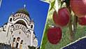 cropped-srpska_elita_logof.jpg